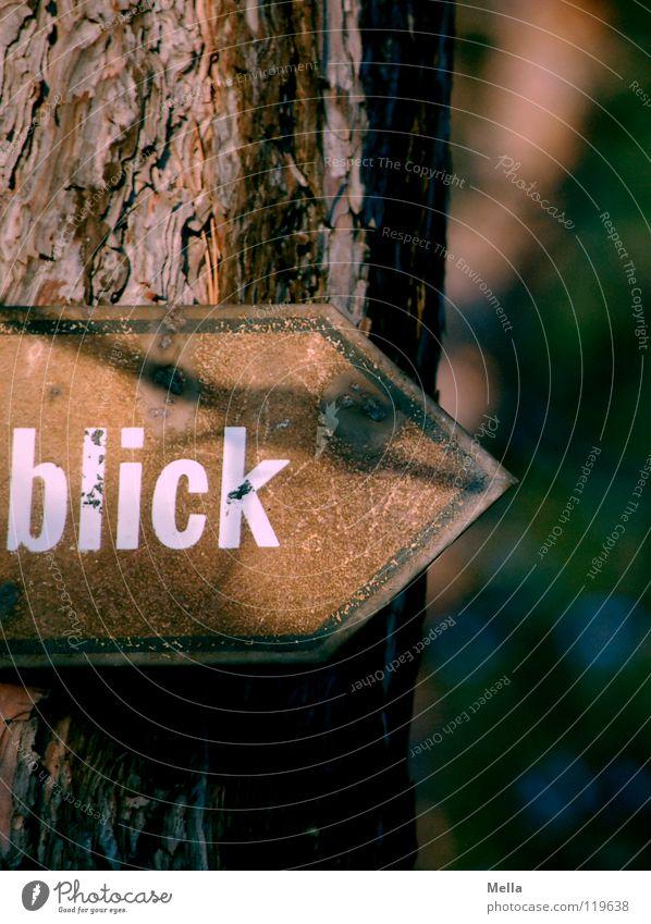 Guckst Du Baum Ferne Wege & Pfade Metall braun Schilder & Markierungen Schriftzeichen Hinweisschild Buchstaben Suche Kommunizieren Spitze Aussicht Pfeil