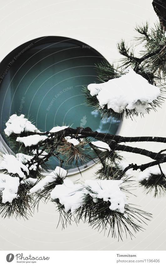 Zatoichi spürt es. Natur Pflanze Winter Kiefer Mauer Wand Fenster Glas ästhetisch einfach kalt grün schwarz weiß Gefühle Zufriedenheit ruhig Schnee rund Zen