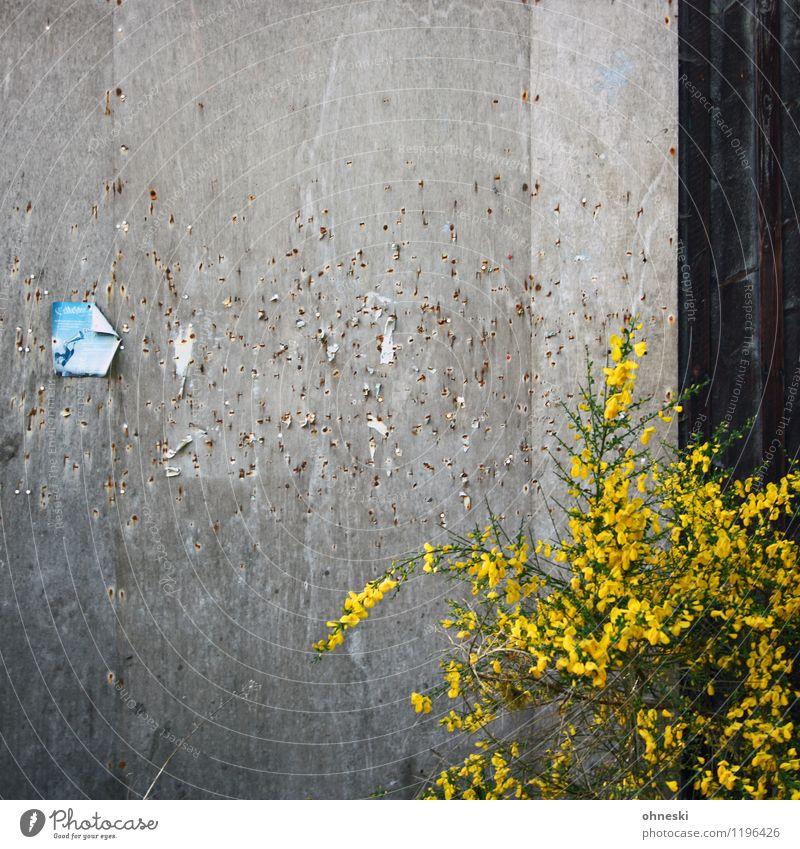 Pinnwand Pflanze Mauer Wand Fassade Schwarzes Brett Zettel alt gelb Kommunizieren Farbfoto Außenaufnahme abstrakt Muster Strukturen & Formen Textfreiraum oben