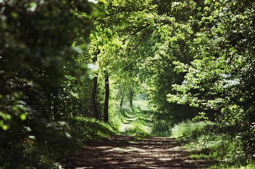 Waldweg grün Baum Blatt Umwelt Frühling Gras natürlich Wege & Pfade Idylle Zukunft Fußweg Ziel Umweltschutz nachhaltig Grünpflanze