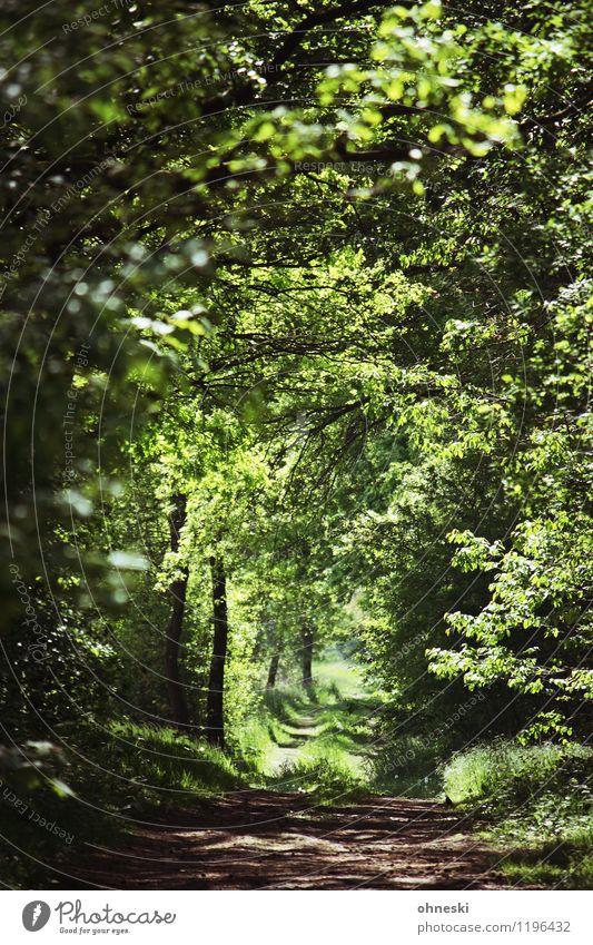 Waldweg Natur grün Baum ruhig Wald Umwelt Leben Frühling Wege & Pfade Schönes Wetter Hoffnung Glaube Grünpflanze