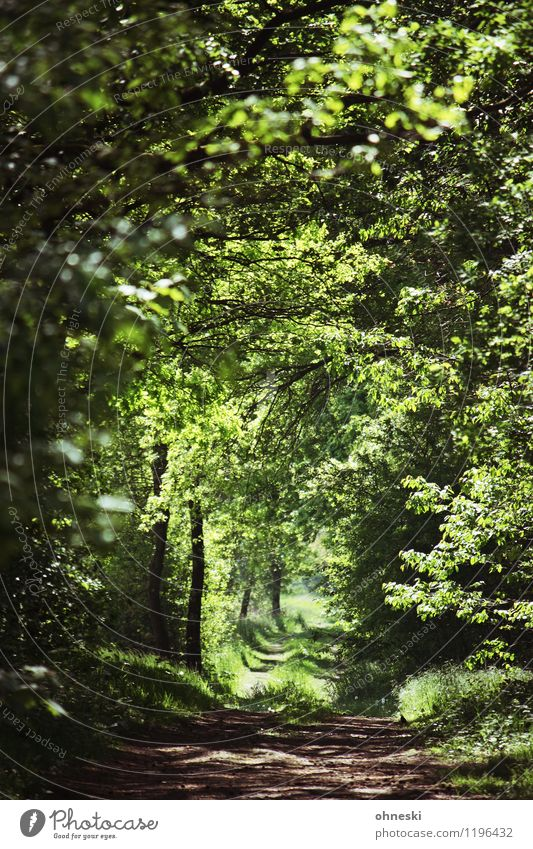 Waldweg Umwelt Natur Frühling Schönes Wetter Baum Grünpflanze Wege & Pfade grün ruhig Leben Hoffnung Glaube Farbfoto Außenaufnahme Menschenleer