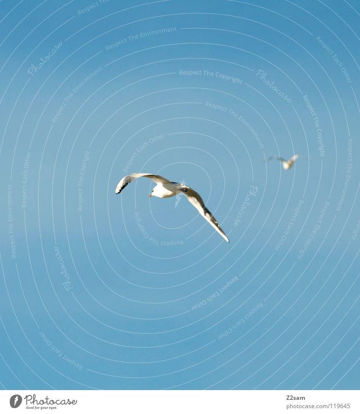 verfolgungsjagd Vogel 2 weiß Feder drehen Unschärfe Tier Verfolgungsrennen fliegen nach Flügel Himmel blau hell Kurve