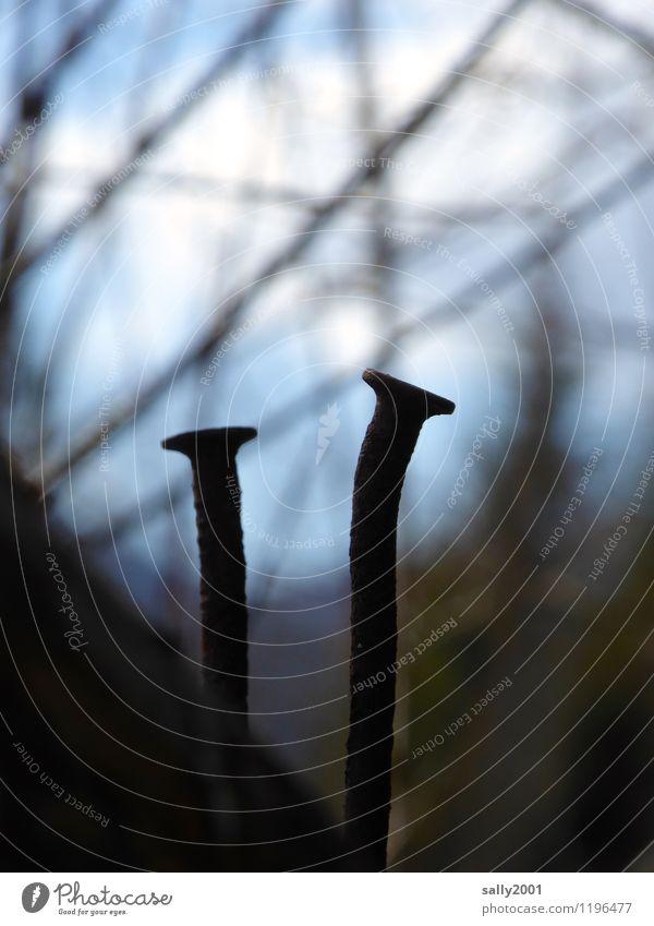 Nagelduo... Landschaft Baum Holz Metall alt festhalten Ast 2 Zusammensein Paar paarweise Neigung gekrümmt stehen vertikal vernagelt Rost Farbfoto Außenaufnahme