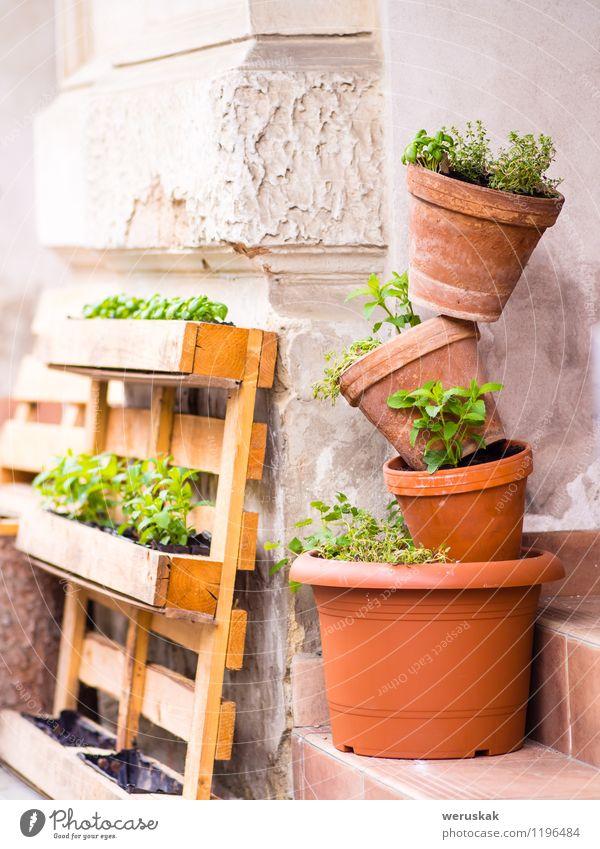 Natur Pflanze grün Erholung Blume klein Garten Freizeit & Hobby Dekoration & Verzierung Wachstum Kreativität Stapel vertikal Container Gartenarbeit Blumentopf