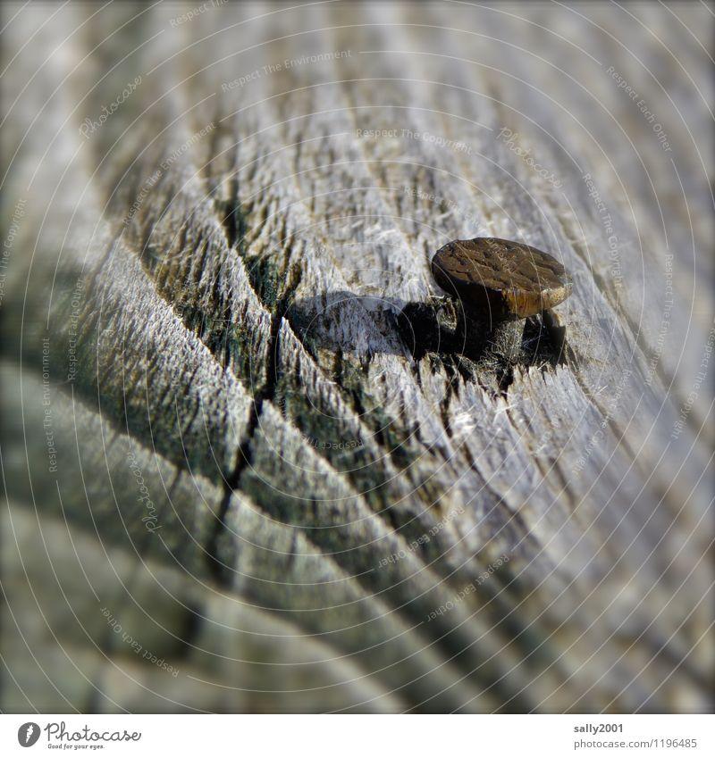 Nagelprobe... Holz alt Verfall Vergänglichkeit Zusammenhalt verwittert Rost festhalten Werkzeug nagelprobe Jahresringe Farbfoto Außenaufnahme Tag