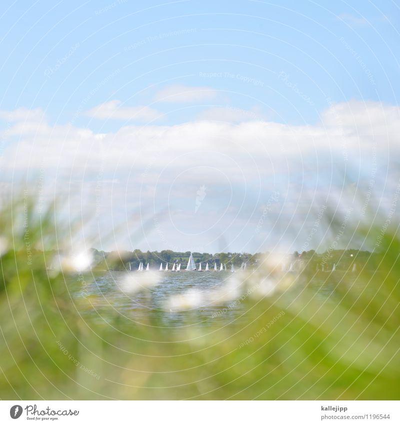 days in june Freizeit & Hobby Sport Sportstätten Wolken Horizont Wetter Schönes Wetter Wind Pflanze Gras Blatt Grünpflanze Schifffahrt Bootsfahrt Sportboot