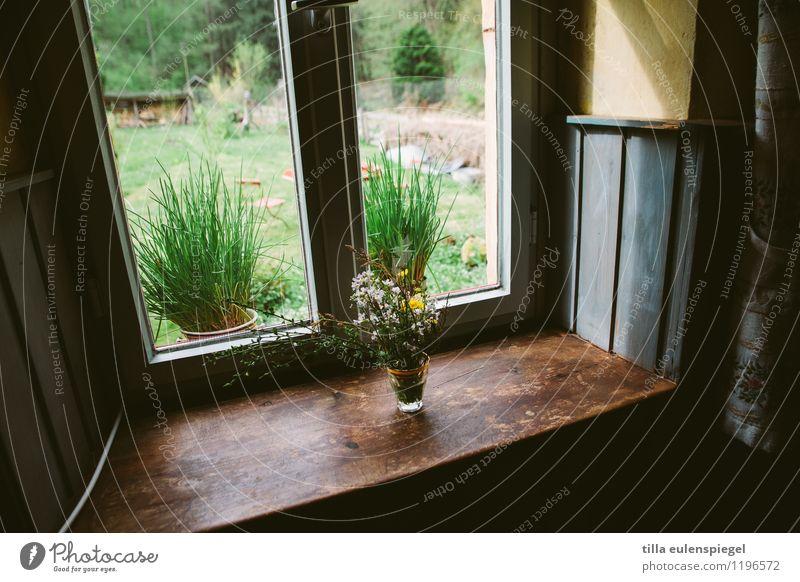 Grünzeug Natur Frühling Pflanze Baum Blume Gras Garten Wald Haus Fenster Glas authentisch dunkel natürlich grün Häusliches Leben Fensterblick Kräuter & Gewürze