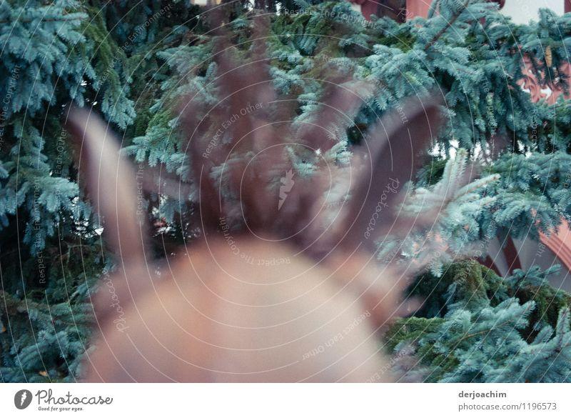 Blick vom Rücken eines Eisenpferdes auf einen Tannenbaum. exotisch Zufriedenheit Ausflug Reitsport Reiten Kunstwerk Kleinstadt Bayern Deutschland Tier Pferd