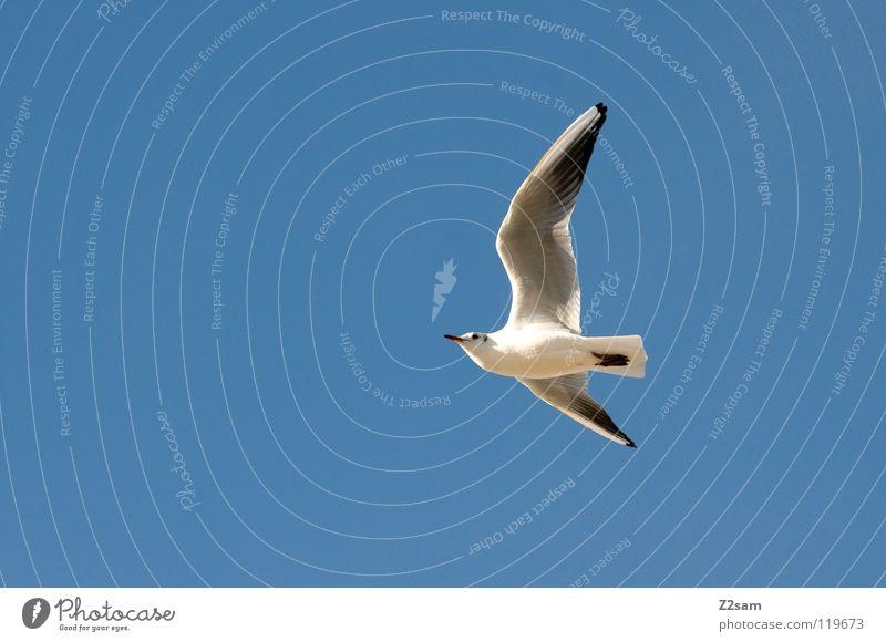 einer von vielen Himmel weiß blau Tier hell Vogel fliegen Feder Flügel drehen Kurve Spannweite