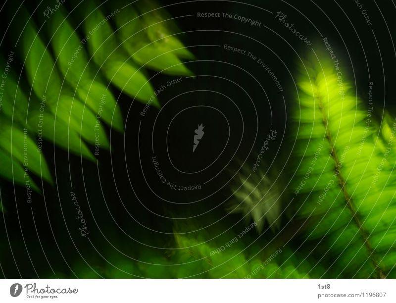 supergrün Umwelt Natur Pflanze Nachthimmel Wetter Baum Garten Park Wiese Wald leuchten Wachstum ästhetisch exotisch Unendlichkeit hell saftig verrückt schön