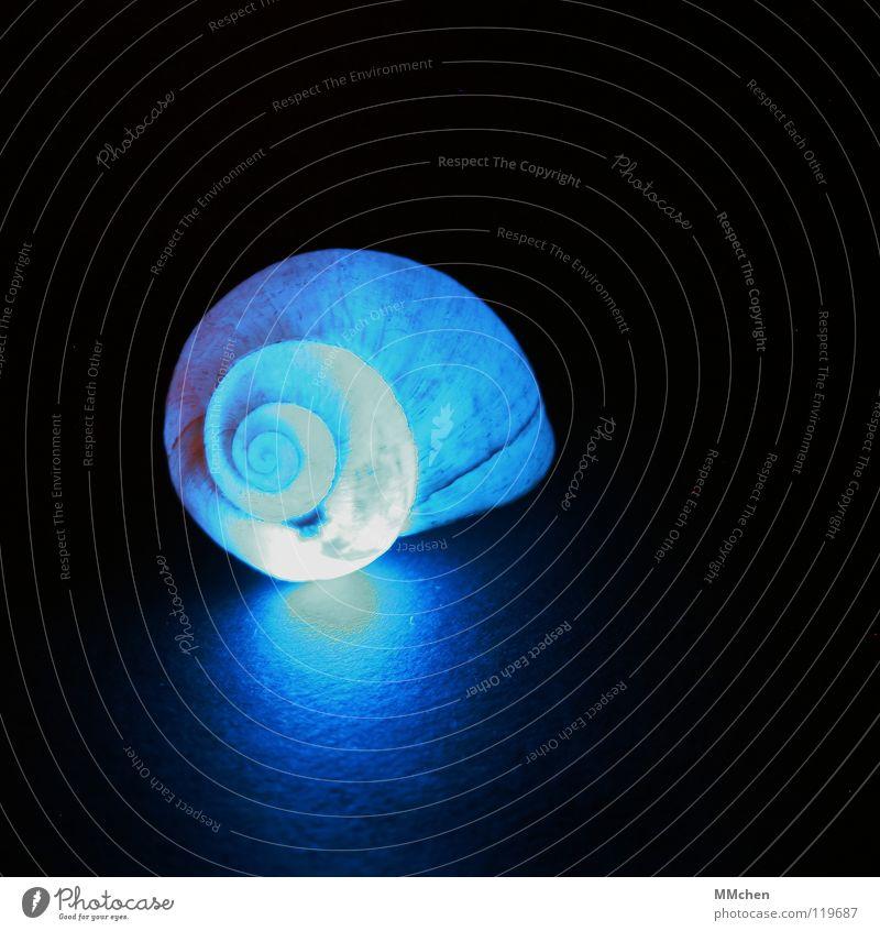 Don`t drink & drive Natur blau schön Tier dunkel Beleuchtung leuchten Dekoration & Verzierung Kreis Spitze weich Schutz Umzug (Wohnungswechsel) Spirale Schnecke Muschel
