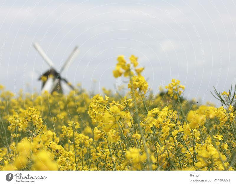 auf dem Land... Natur Pflanze Baum Landschaft Wolken Umwelt gelb Frühling Architektur natürlich grau außergewöhnlich braun Feld Wachstum Idylle