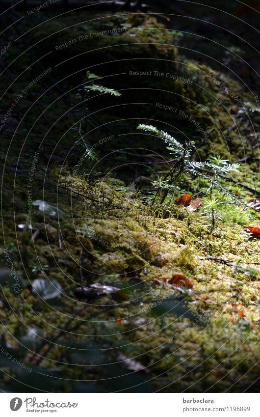 Boden- und Ackertag | Moosteppich Natur Pflanze grün Baum Erholung Blatt ruhig dunkel Wald Umwelt Stimmung hell leuchten Erde Sträucher Warmherzigkeit