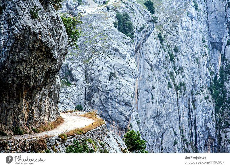 Wohin mich der Weg auch führt... Natur Ferien & Urlaub & Reisen Pflanze Sommer Landschaft Tier Ferne Umwelt Berge u. Gebirge Gefühle Wege & Pfade Freiheit
