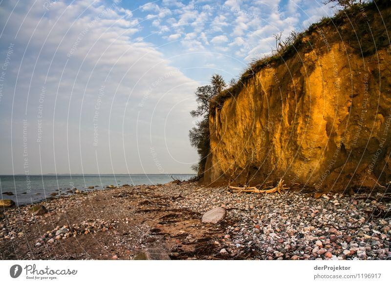 Gold, Gold... ne doch nicht Umwelt Natur Landschaft Pflanze Tier Urelemente Frühling Schönes Wetter Felsen Wellen Küste Strand Ostsee Meer Insel Gefühle Freude