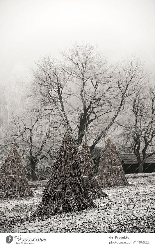 Winterliches Feld Natur Ferien & Urlaub & Reisen alt Pflanze Baum Landschaft Winter kalt Berge u. Gebirge Umwelt außergewöhnlich Eis Feld wandern authentisch ästhetisch