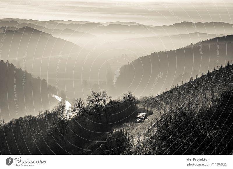 Winternebel in der Steiermark Natur Ferien & Urlaub & Reisen Pflanze Landschaft Tier Ferne Berge u. Gebirge Umwelt Gefühle Wiese Glück Tourismus Zufriedenheit