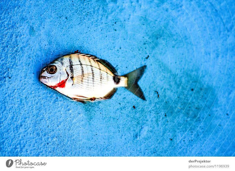 So schön und traurig zugleich Natur Ferien & Urlaub & Reisen Pflanze Sommer Meer Landschaft Tier Umwelt Gefühle Auge Foodfotografie Arbeit & Erwerbstätigkeit