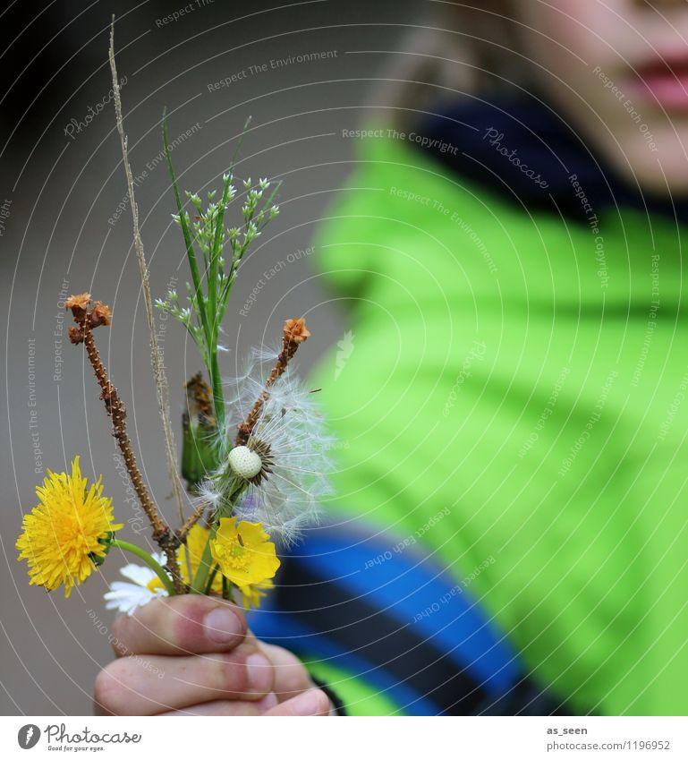 Schenk ich dir! Kind Natur grün Farbe Hand gelb Leben Liebe Junge Gesundheit wild dreckig Geburtstag Kindheit authentisch Arme