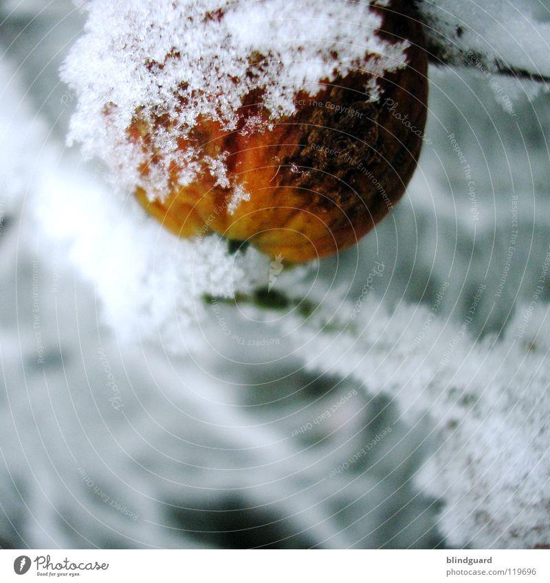 Gefrierbrand weiß Baum grün Winter Blatt dunkel kalt Schnee Eis orange Coolness Frost Ast zart gefroren Pflanze