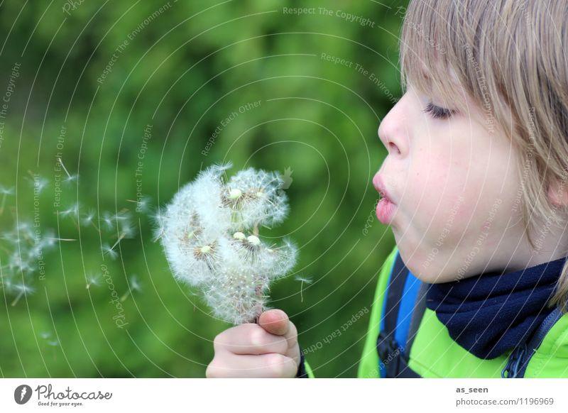 Der Junge mit der Pusteblume Kindheit Leben 1 Mensch 8-13 Jahre Umwelt Natur Pflanze Frühling Sommer Blume Blüte Löwenzahn Wiese Feld Wald Blumenstrauß