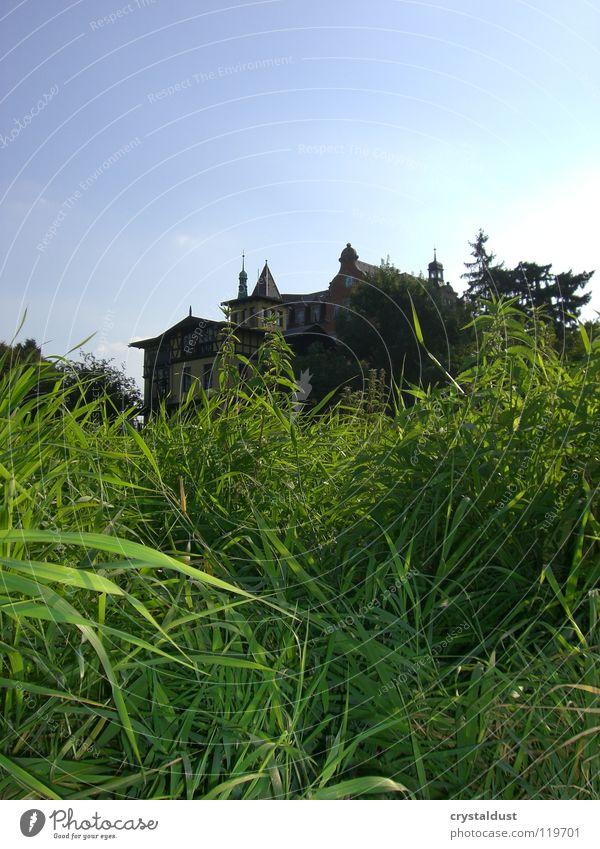 Villa Marie Gras grün Wiese Dresden Sommer Freiheit Himmel Makroaufnahme