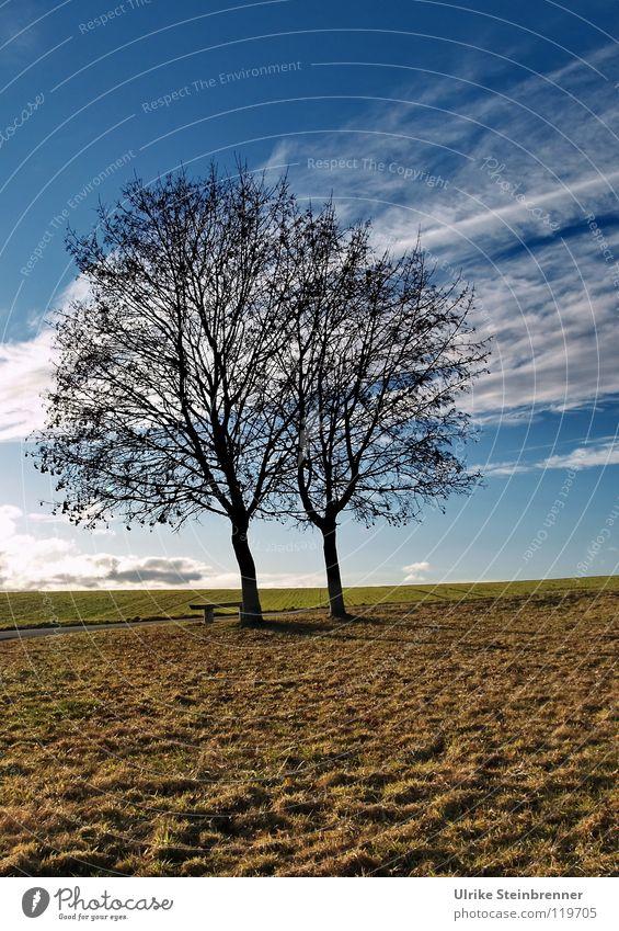 Januar Himmel Baum blau Pflanze Winter Wolken Einsamkeit Landschaft Luft braun 2 Zusammensein Feld warten Wetter Horizont