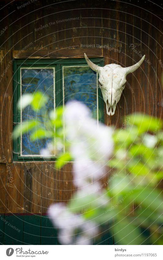 Onkel Tom`s Hütte Natur Fenster Stil außergewöhnlich Lifestyle Fassade Kopf Wohnung wild Dekoration & Verzierung Häusliches Leben authentisch Idee Kultur