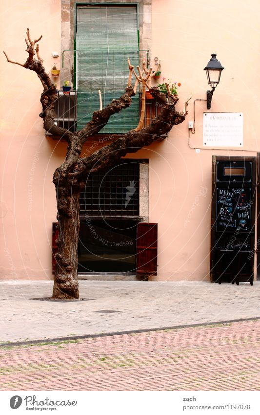 Freiräume Stadt Pflanze Baum Haus Fenster Wand Architektur Mauer rosa Fassade Häusliches Leben Tür Schilder & Markierungen Schriftzeichen Platz Hinweisschild