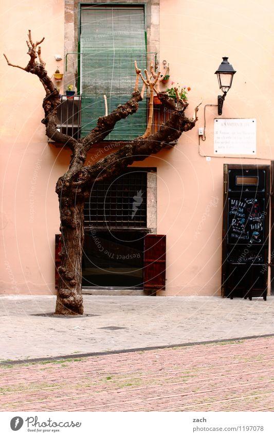 Freiräume Städtereise Pflanze Baum Barcelona Spanien Stadt Stadtzentrum Altstadt Haus Platz Marktplatz Bauwerk Architektur Mauer Wand Fassade Fenster Tür