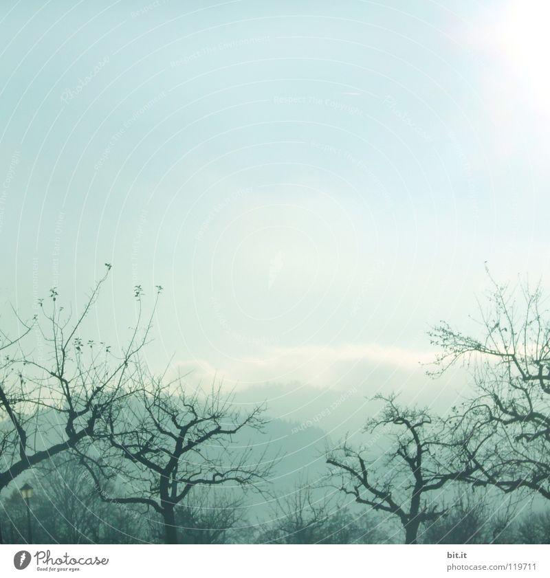 neblig-knorrig-sonnig Himmel Natur Ferien & Urlaub & Reisen blau weiß Baum Einsamkeit Ferne Winter Wald kalt Berge u. Gebirge Wiese Schnee Hintergrundbild