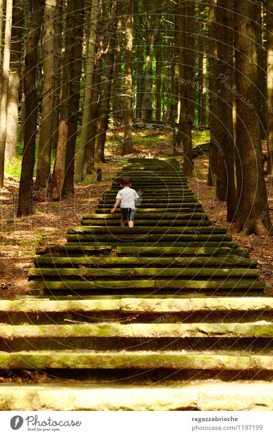 Eine Treppe in den Wäldern Mensch grün Baum Wald Berge u. Gebirge Frühling Junge Freiheit braun gehen wild frei einfach Mut Kleinkind