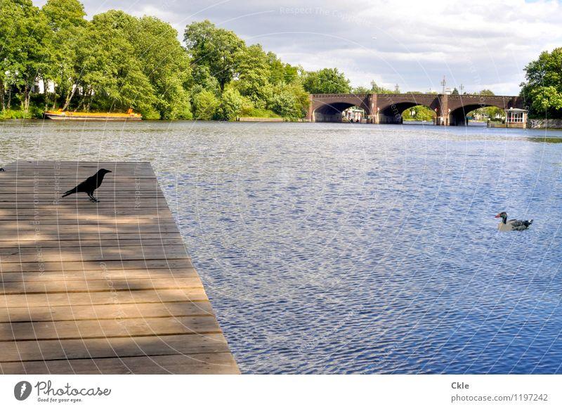 Wer hat den Vogel? Natur Stadt blau Pflanze grün weiß Landschaft Wolken Tier gelb grau Schwimmen & Baden See braun Park