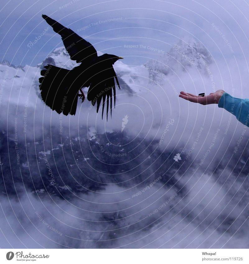 Fastfood Dohle Vogel Keks Hand Schweiz Wolken Alpen Schildhorn Berge u. Gebirge Ernährung