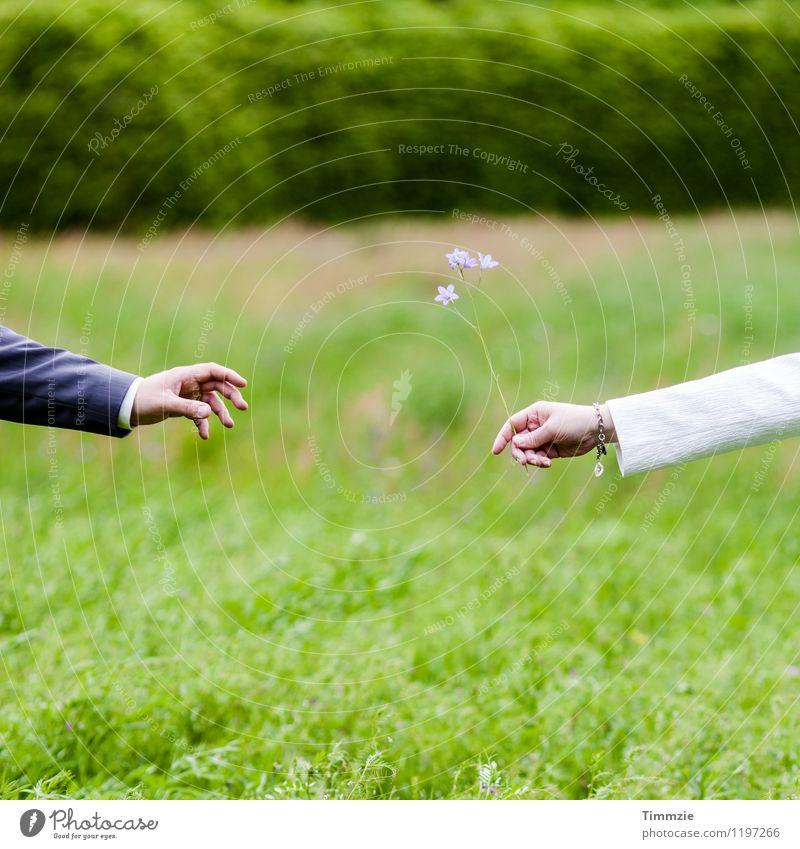 hand me flowers Mensch grün Blume Hand Liebe Wiese Zusammensein Freundschaft Romantik Verliebtheit Sympathie Flirten Einigkeit
