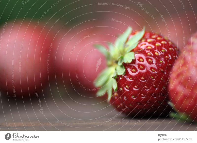 endlich Erdbeersaison grün rot Gesunde Ernährung natürlich Essen Gesundheit Lebensmittel Frucht ästhetisch genießen süß rein lecker Duft Bioprodukte Picknick