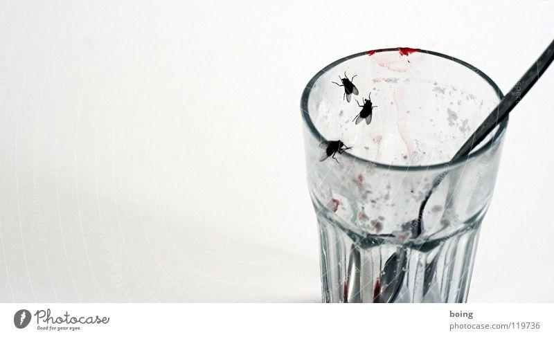 Milch ist gegen Maroditis Sommer kalt Glas Fliege leer süß Erfrischung Dessert Erdbeeren Milch Löffel Lippenstift Becher Salto Stechmücke Schädlinge