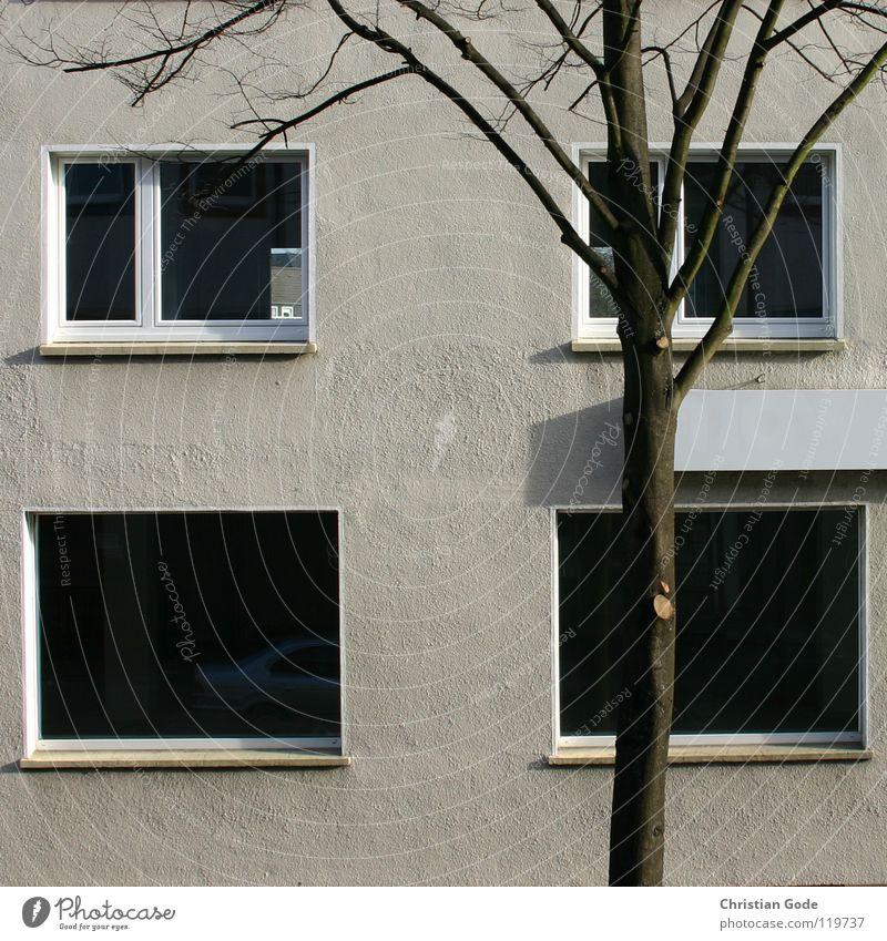 Altes Möbelhaus Baum Stadt Fenster grau Gebäude Kunst Architektur Schilder & Markierungen Baustelle Ausstellung Ruhrgebiet Nordrhein-Westfalen Vernissage