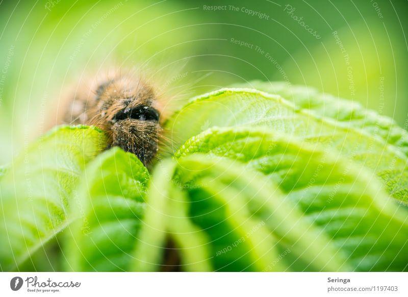 Welche Richtung geht es weiter Umwelt Natur Landschaft Pflanze Tier Frühling Sommer Schönes Wetter Wiese Feld Wald Käfer 1 krabbeln braun mehrfarbig gelb grün