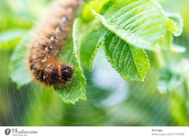 Am Ende, andere Richtung Tier Schmetterling Käfer Wurm Tiergesicht 1 braun mehrfarbig gelb grün Raupe Farbfoto Außenaufnahme Nahaufnahme Detailaufnahme