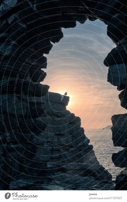 Phönix Horizont Schönes Wetter Meer Ruine Mauer Wand Vogel 1 Tier Stein beobachten Blick Idylle Farbfoto Gedeckte Farben Außenaufnahme Menschenleer Dämmerung