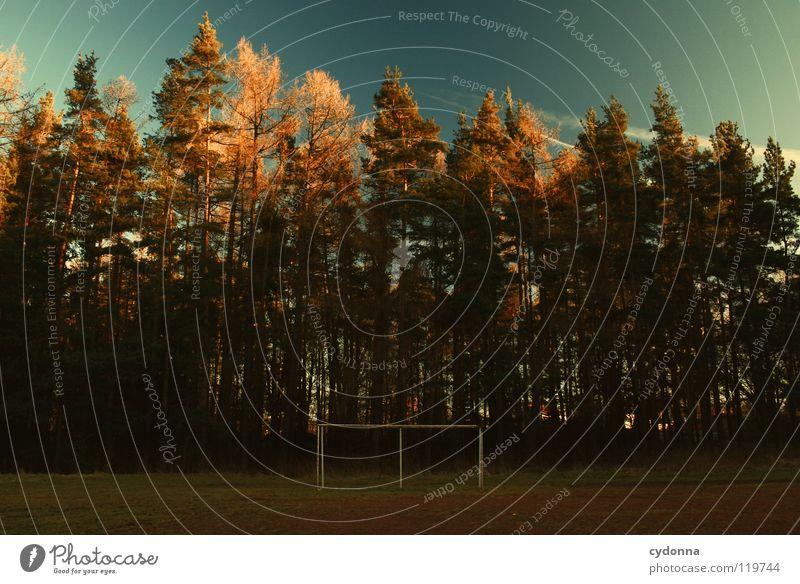 Nach dem Schlusspfiff ist es still. Himmel Natur alt schön Baum Winter Freude Blatt Einsamkeit ruhig Wald Ferne Landschaft dunkel Leben kalt