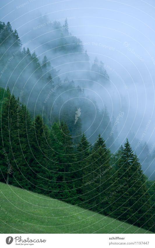 Nebelsteilwand Umwelt Natur Landschaft Pflanze schlechtes Wetter Baum Gras Wiese Wald Alpen Berge u. Gebirge dunkel grün Bundesland Tirol Außenaufnahme