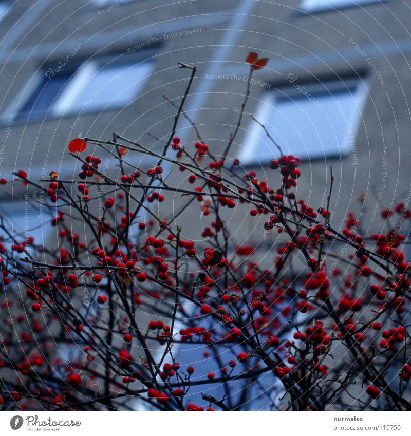 Juckpulverbusch Natur rot Winter Gefühle grau springen Luft Wohnung Angst mehrere frei Sträucher Sauberkeit Tee Jagd Jahreszeiten