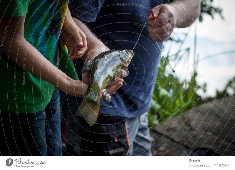 Schleie am Haken Tier Fisch 1 Angeln Angelschnur fangen Jagd frisch natürlich schleimig braun gelb gold grün Glück Erfolg Leidenschaft Freizeit & Hobby Freude