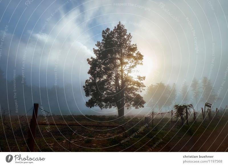 baum im abend nebel Himmel Natur Ferien & Urlaub & Reisen blau schön Baum Erholung Einsamkeit Landschaft ruhig Wolken Traurigkeit Herbst Gras Tod Gesundheit