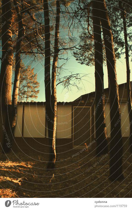 Back to Civilisation Winter Einsamkeit ruhig Stimmung Sehnsucht Baum Wald Tanne Fichte bewegungslos Gedanke Erfahrung Jahreszeiten Blatt dunkel leer Eingang