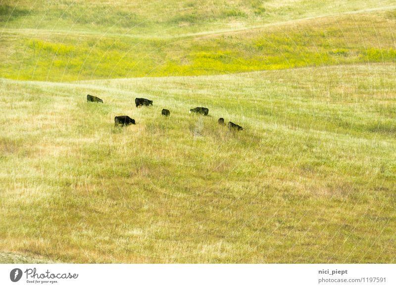 bildschön Natur Pflanze grün Landschaft ruhig gelb natürlich Gras Essen Feld wild authentisch frei Tiergruppe weich Hügel