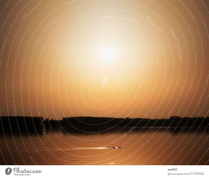 Runden drehen Umwelt Natur Landschaft Tier Wolkenloser Himmel Horizont Sonne Klima Wetter Schönes Wetter Wärme See Entenfamilie 4 Tierfamilie Bewegung leuchten
